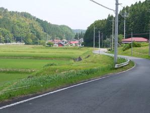 asino_030.jpg
