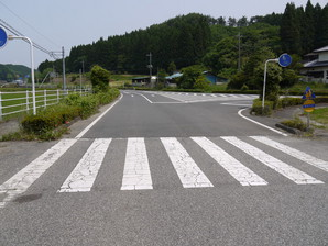 asino_042.jpg