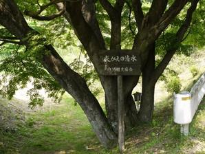 asino_061.jpg