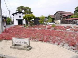 asino_091.jpg