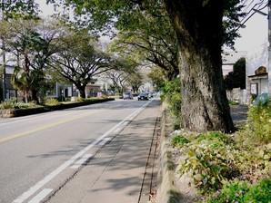 ishibashi_47.jpg