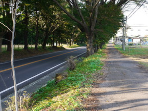 ishibashi_54.jpg