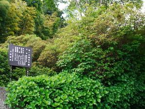 kitsuregawa_17.jpg