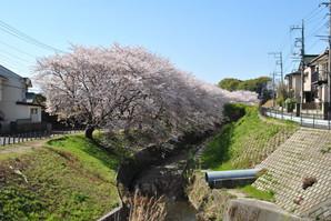 mitsukyo_11.jpg