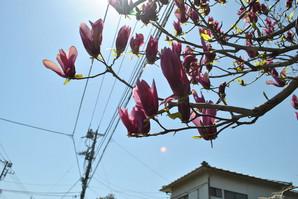 mitsukyo_23.jpg
