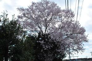 nakahara_31.jpg