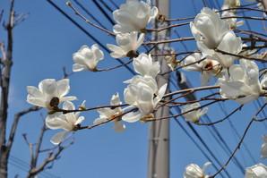 nakahara_34.jpg