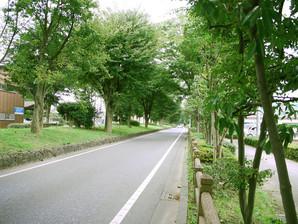 narimasu_19.jpg