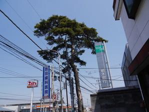 ohsyu_21.jpg