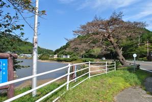 shiroishi_22.jpg