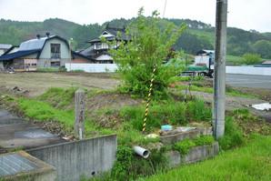 sibutami_16.jpg