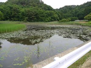 sirakawa_49.jpg