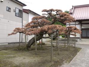 sirakawa_65a.jpg