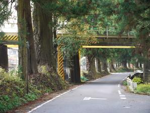 utsunomiya_35.jpg