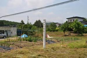 yoshioka_43.jpg