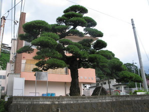aoyagi_35.jpg