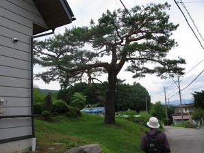 kyoraishi_47.jpg