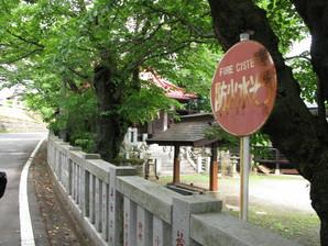 saruhashi_06.jpg