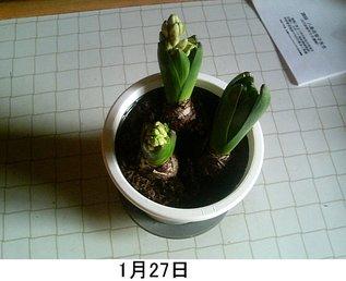 2006_01_27.jpg