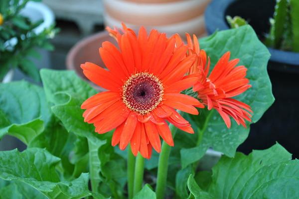 flower_nikon.jpg