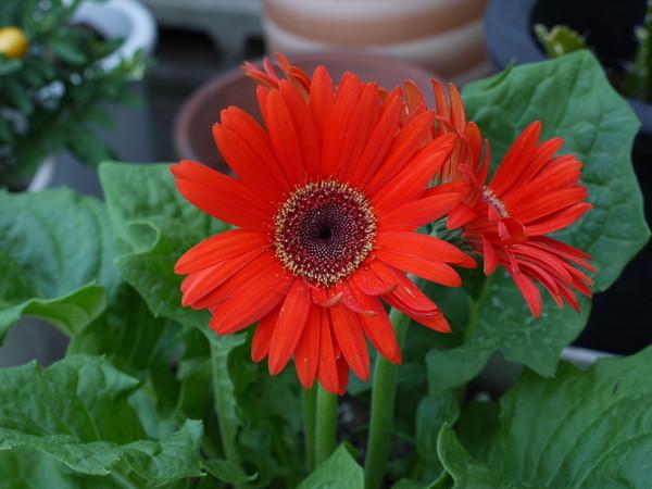 flower_pana01.jpg