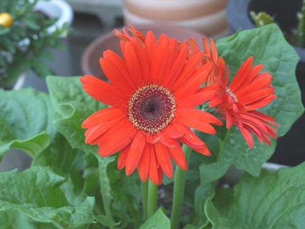 flower_pana02.jpg