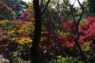 genjiyama_02.jpg