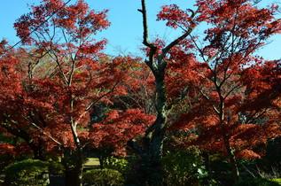 genjiyama_09.jpg