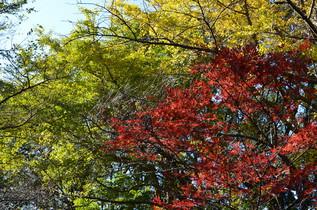 genjiyama_14.jpg