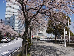 mirai_14.jpg