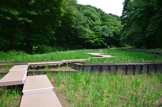shikinomori_08.jpg