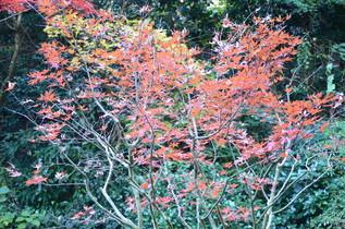 tokeiji_04.jpg
