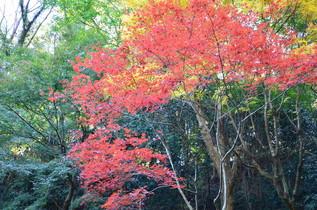 tokeiji_06.jpg
