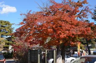 nagatoro_10.jpg