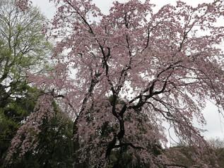 uenopark_02.jpg