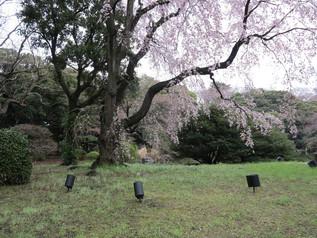 uenopark_03.jpg