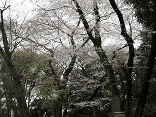 uenopark_06.jpg