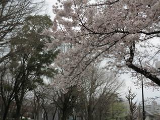 uenopark_08.jpg