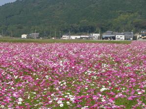 echigawa_12.jpg