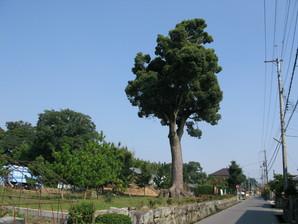 echigawa_22b.jpg