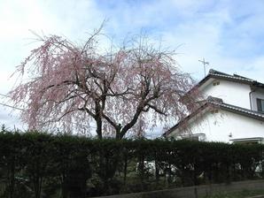 iwamurata_04.jpg