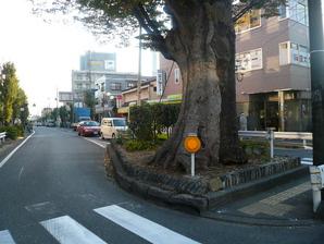 kohnosu_07.jpg
