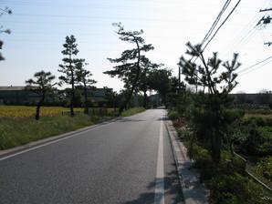 samegai_55.jpg