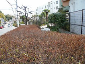 fujisawa__014.jpg