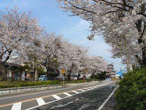 fujisawa__023.jpg
