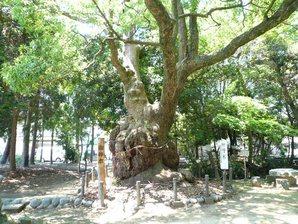 kakegawa_021.jpg