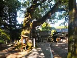 shimada_073.jpg